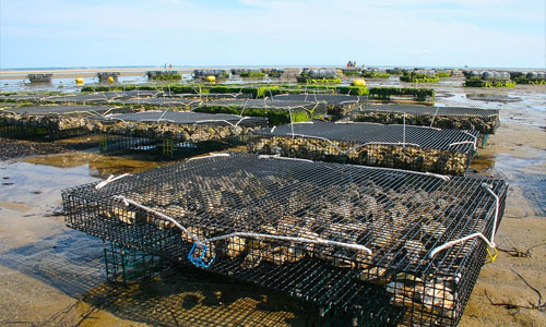 oceans new farms fish cage - Can the Oceans Be Our New Farms?