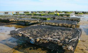 oceans-new-farms-fish-cage